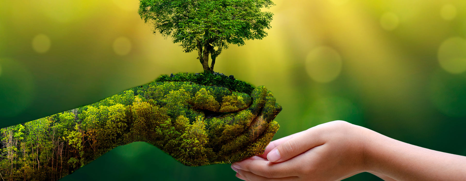 Human reaching out to a nature hand growing a tree   Cypress Cove Landkeepers