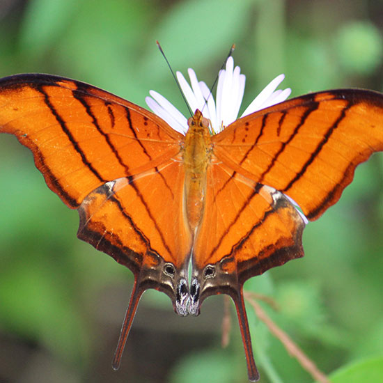 Beautiful butterfly close-up   Donate to Cypress Cove Landkeepers