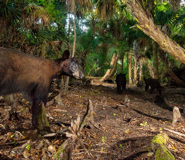 Discover the Biodiversity of Florida's Ecosystem at the Gore Nature Education Center | Cypress Cove Landkeepers