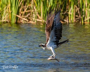 Photographer Frank Ballatore Images Gallery | Nature Photography at Gore Nature Education Center and Cypress Cove Landkeepers